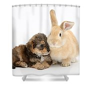Yorkipoo Pup With Sandy Rabbit Shower Curtain