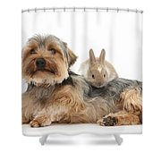 Yorkshire Terrier Dog And Baby Rabbit Shower Curtain
