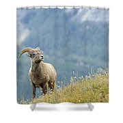 Young Bighorn Sheep, Windy Point Shower Curtain