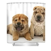 Young Dogs Shower Curtain