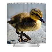 Young Duck Shower Curtain