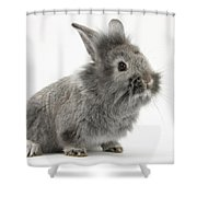 Young Silver Lionhead Rabbit Shower Curtain