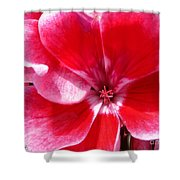 Zonal Geranium Named Candy Fantasy Kiss Shower Curtain