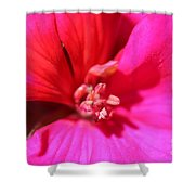 Zonal Geranium Named Tango Neon Purple Shower Curtain