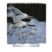 A Pair Of Japanese Or Red-crowned Shower Curtain