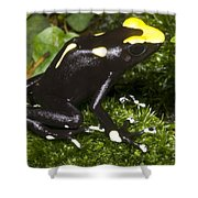 Dyeing Poison Frog Shower Curtain