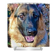 10-month-old Shepherd 2 Shower Curtain