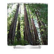 Redwoods Sequoia Sempervirens Shower Curtain