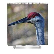 10- Sandhill Crane Shower Curtain