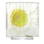 1070-001 Shower Curtain