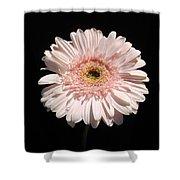 1074c Shower Curtain