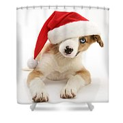 Border Collie Puppy Shower Curtain by Jane Burton