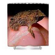 Darwins Frog Shower Curtain