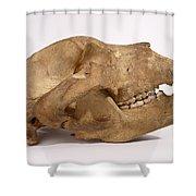 Kodiak Bear Skull Shower Curtain