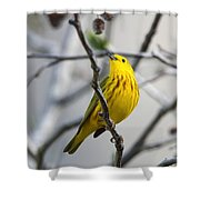 Yellow Warbler Shower Curtain