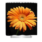 1109-6 Shower Curtain