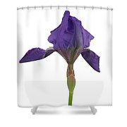 Blue Iris Blooming Shower Curtain