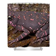 Harlequin Frog Shower Curtain