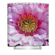 Pink Cactus Flower Shower Curtain
