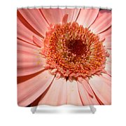 1214 Shower Curtain
