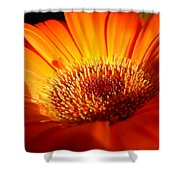 1219 Shower Curtain
