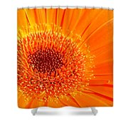 1229-003 Shower Curtain
