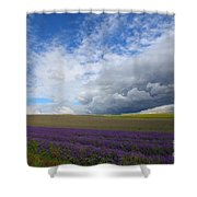 Lavenders Shower Curtain