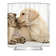 Puppy And Guinea Pig Shower Curtain by Mark Taylor