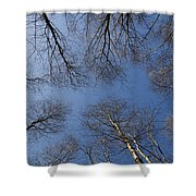 Trees In Epping Forest Shower Curtain