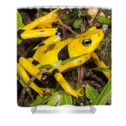 Harlequin Toad Shower Curtain