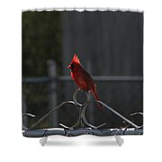 1417 Fenced In Shower Curtain