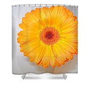 1424-001 Shower Curtain