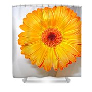 1424c Shower Curtain