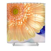 1477-001 Shower Curtain