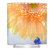 1491-001 Shower Curtain