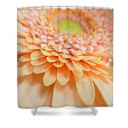 1520 Shower Curtain