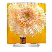 1526-002 Shower Curtain