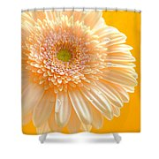 1527-002c Shower Curtain