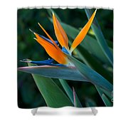 Balboa Park San Diego Shower Curtain