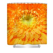 1607c-001 Shower Curtain