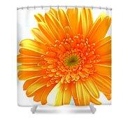1609-001 Shower Curtain