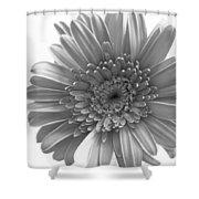 1609-002 Shower Curtain