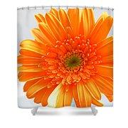 1609 Shower Curtain