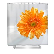 1610c Shower Curtain