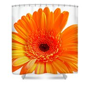 1621-002 Shower Curtain