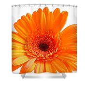 1621c1 Shower Curtain