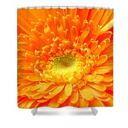 1626-001 Shower Curtain