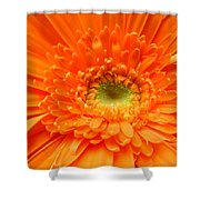 1627c Shower Curtain