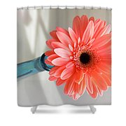 1636-001 Shower Curtain