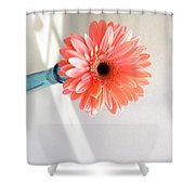 1636c Shower Curtain
